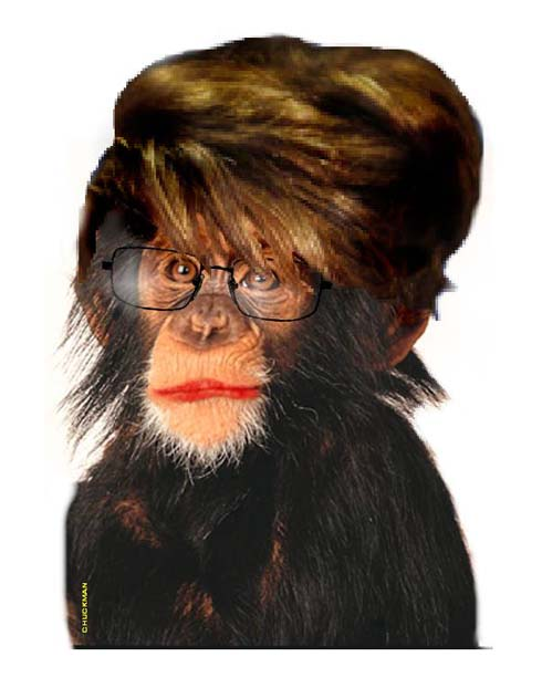 Palin chimp no words